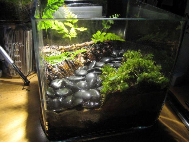 terrarium de cact es et plantes grasses jolis terrariums. Black Bedroom Furniture Sets. Home Design Ideas
