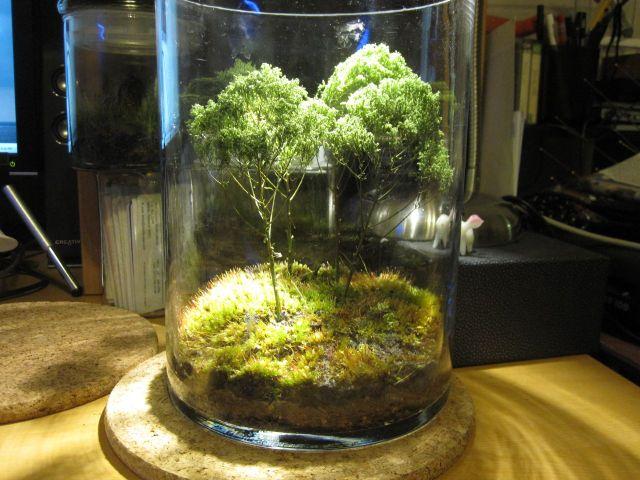 Idees De Jardins Miniatures Pour L Interieur Et L Exterieur