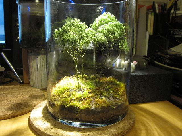 Mini-paysage en terrarium (Jolis terrariums)