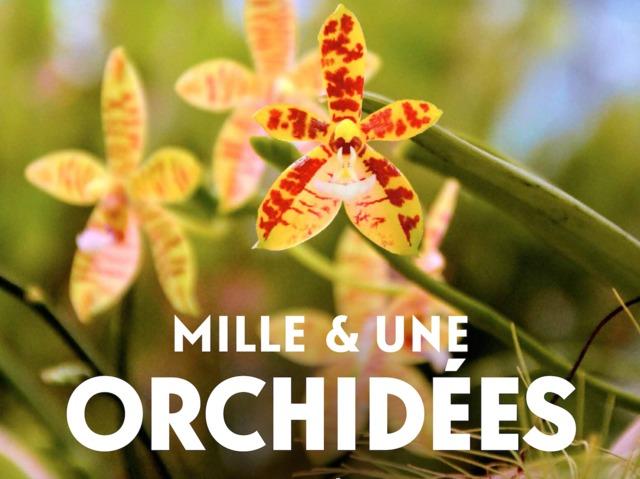 1001 orchidées au Jardin des Plantes de Paris, du 1er au 27 février 2017