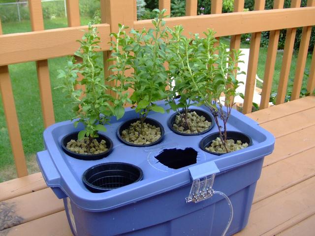 L'hydroponie : cultiver des plantes sans sol