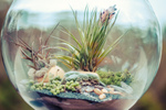 Jolis terrariums