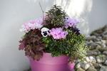 Potée fleurie pour l'hiver avec des cyclamens