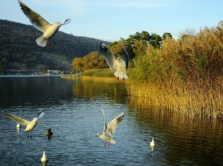 Oiseaux au bord d'un lac