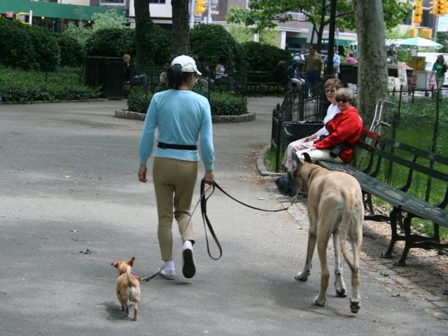 Quelle race de chien dans un appartement en ville ?