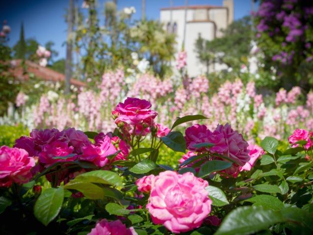 La chromothérapie au jardin : des couleurs pour se sentir bien