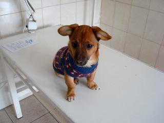 Chien en consultation vétérinaire