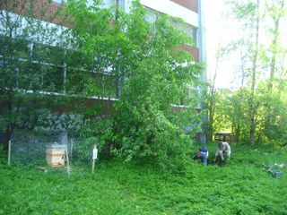 Ruche dans un espace vert urbain à exploiter