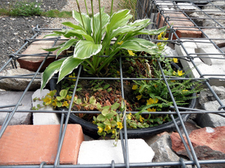 Potée de plantes insérée dans un gabion