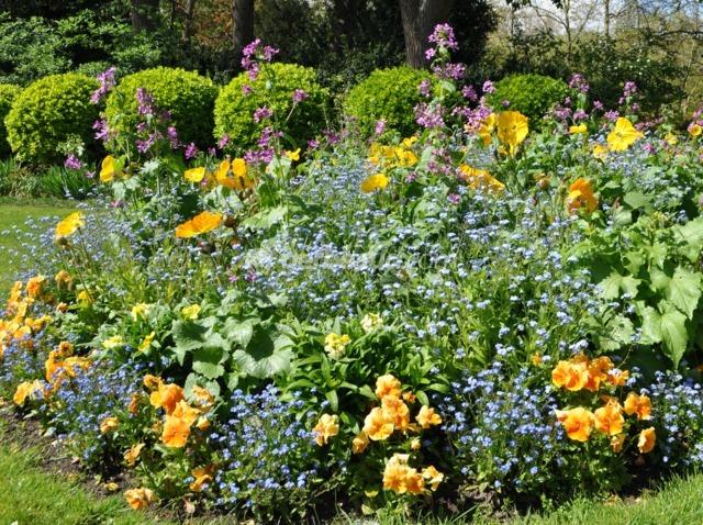 Un massif fleuri dès le début du printemps