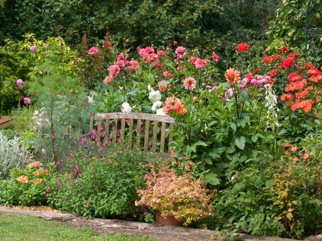 Jardin fiches plantes tout for Jardin ornement fleurs