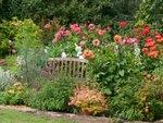 Dahlia, alstroemeria et canna : trois bulbeuses stars pour votre été !