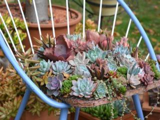 Plantes grasses installées sur une chaise
