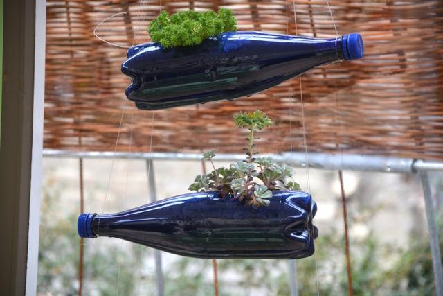 Plantations dans des bouteilles en plastique