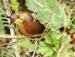 Contre les limaces : ce qui marche vraiment