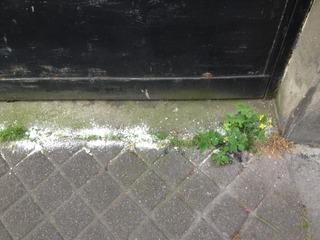 Bicarbonate sur des adventices devant un garage