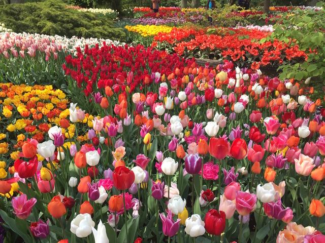 Au royaume des tulipes