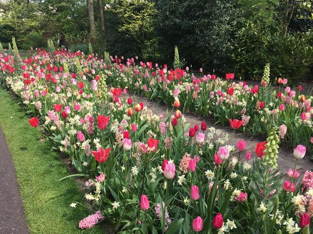 Composition narcisses tout - Bulbes a planter au printemps ...