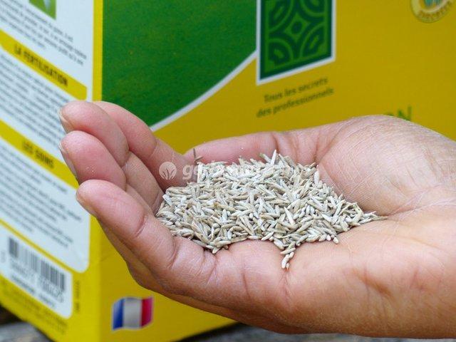 Créer une pelouse : le semis