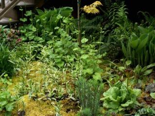 Disporum et autres plantes d'ombre