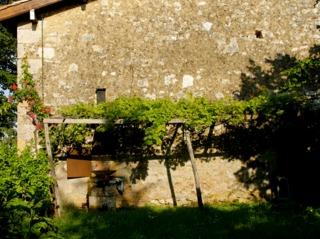Treille contre la façade d'une vieille maison