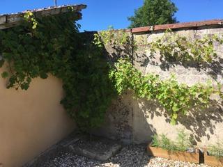 Une treille sur ma terrasse : plantation de la vigne, installation
