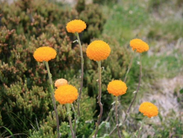 Les meilleures fleurs à faire sécher pour les bouquets secs