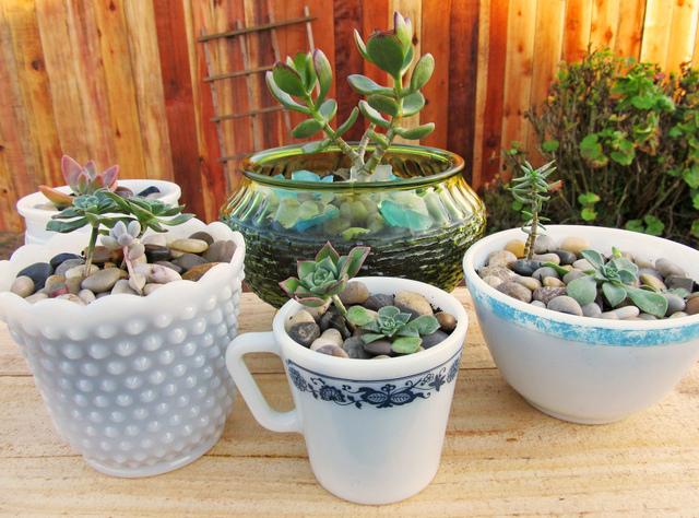 Plantes grasses dans de la vaisselle vintage (Plantations dans des contenants insolites)