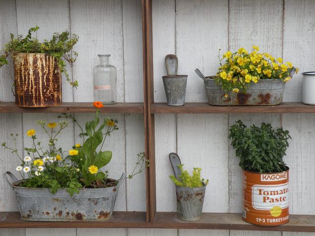 Plantes dans des pots en zinc et boîtes métalliques
