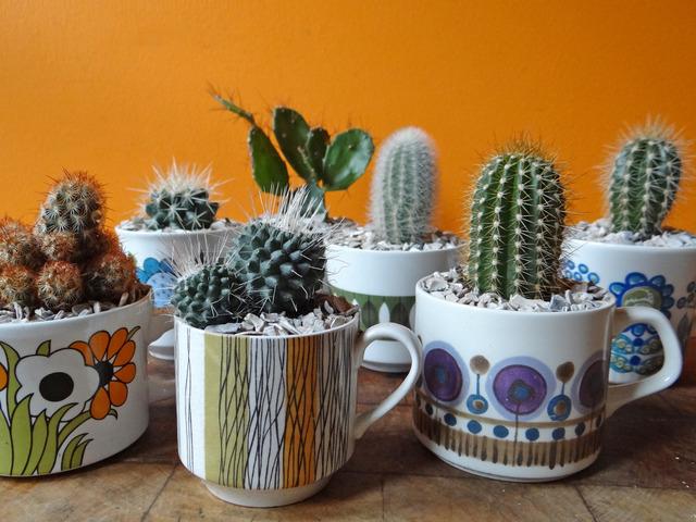 Collection de cactus dans une collection de mugs