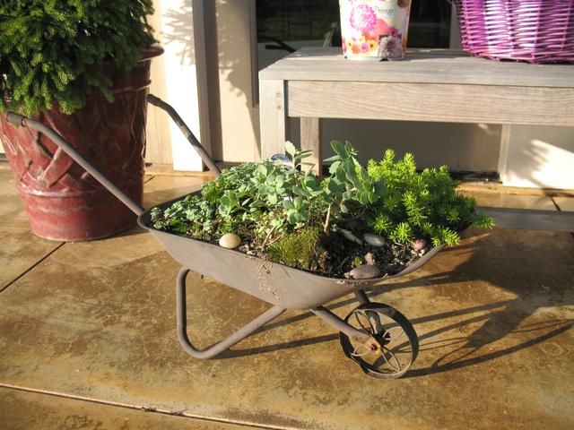 Brouette de plantes grasses