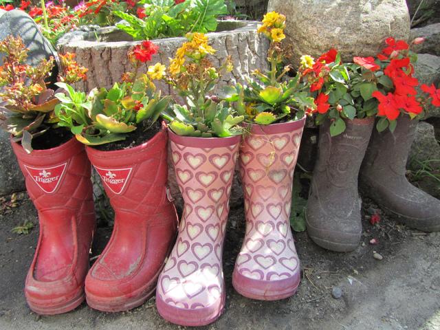 Plantations dans des bottes en caoutchouc