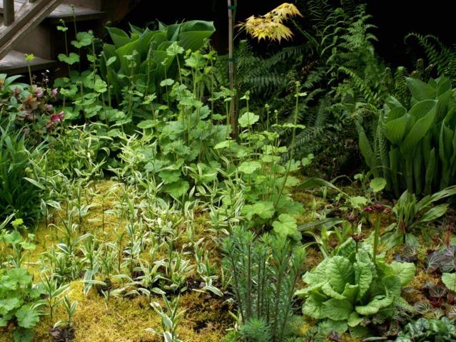 Utiliser les micro-climats au jardin pour planter des végétaux exigeants