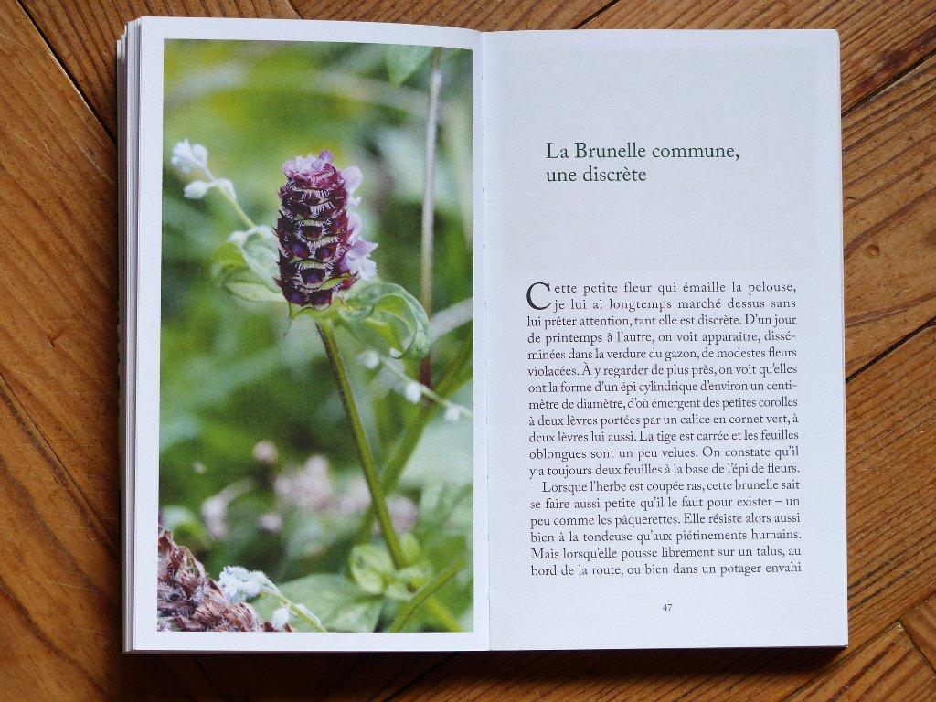 j'ai vu une fleur sauvage - l'herbier de malicorne - livre de