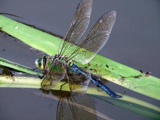 La petite faune du bassin