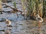 Les zones humides, des milieux à protéger