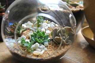 Terrarium sec de plantes grasses