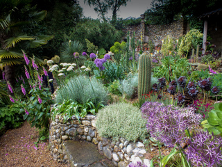 Cactus, succulentes et plantes de sol sec