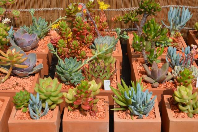 Plantes grasses (Cactus et plantes grasses)