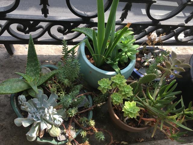 Potées de plantes grasses au bord d'une fenêtre (Cactus et plantes grasses)