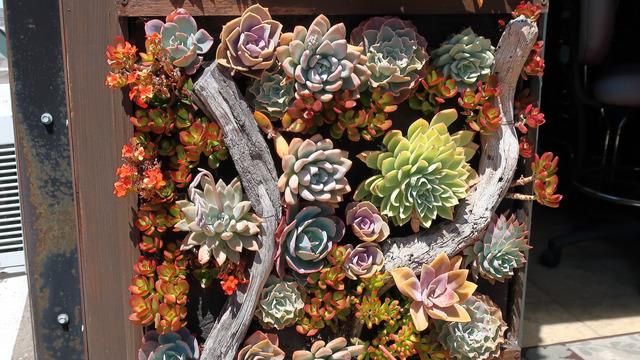 Tableau végétal avec des succulentes (Cactus et plantes grasses)