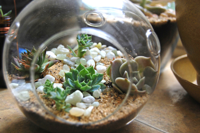 terrarium sec de plantes grasses cactus et plantes grasses. Black Bedroom Furniture Sets. Home Design Ideas