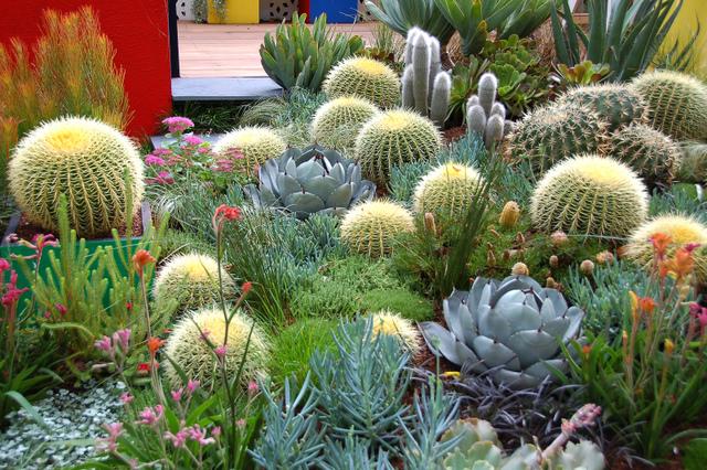 Scène colorée avec cactus et plantes grasses (Cactus et plantes grasses)