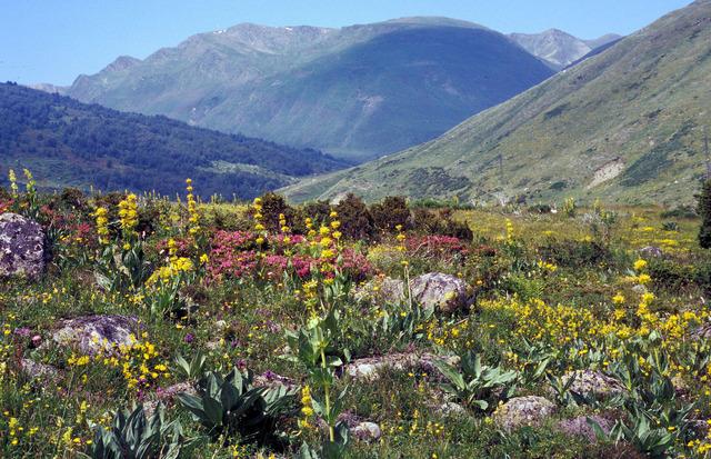 Fleurs de montagne (Pyrénées)