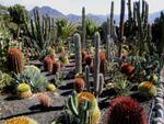 Diaporama : Cactus et plantes grasses