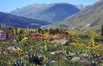 Flore de montagne