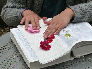 Disposition des fleurs sur le papier
