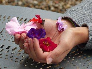Fleurs du jardin pour herbier