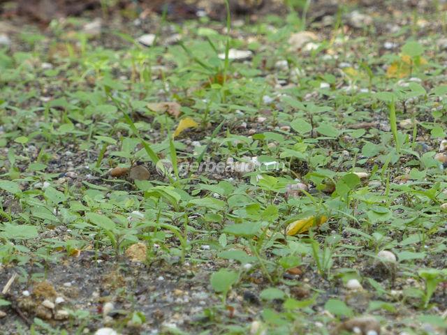 Faux semis : limiter les mauvaises herbes au jardin