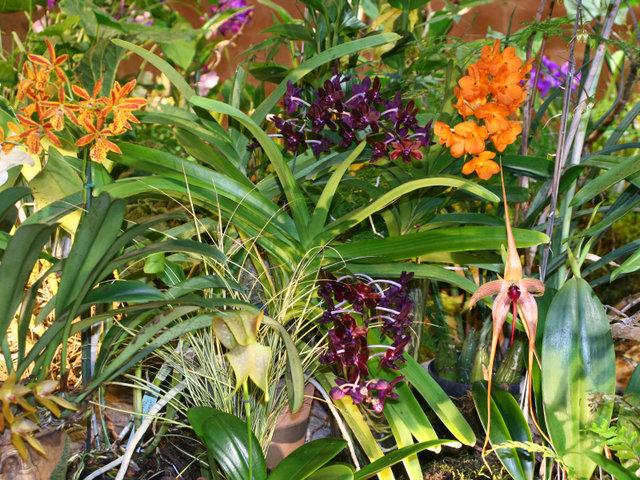 Orchidées : 12e exposition-vente internationale à Fontfroide